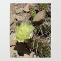 Cactus with Yellow Flower by sjkramer001