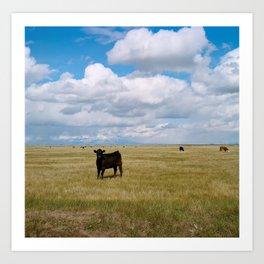 Cows of Colorado Art Print