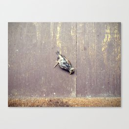 more dead birds Canvas Print
