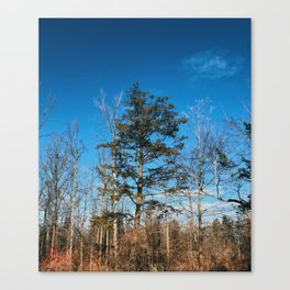 Lonely Pine Standing Canvas Print
