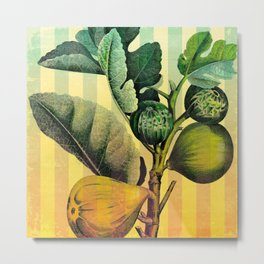 Figs and Stripes Metal Print