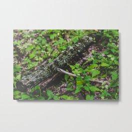 Tree Log Metal Print