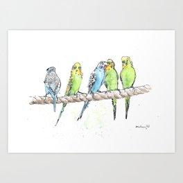 A Row of Budgerigars! Art Print