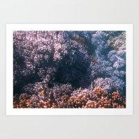 Soft Corals, Great Barrier Reef Art Print
