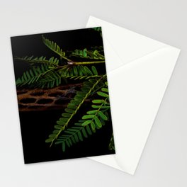 Mesquite Sprig on Cholla Wood Stationery Cards