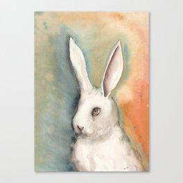 Portrait of a White Rabbit Canvas Print