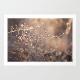 frost magic Art Print