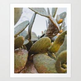 Cactus Plant Close Up | Close Up nature photography | Fine art travel photography | Cactus plant Art Print
