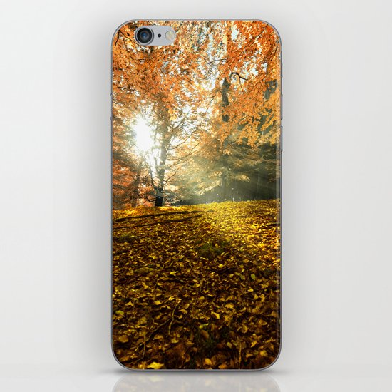 Morning sunbeam in the forest iPhone & iPod Skin