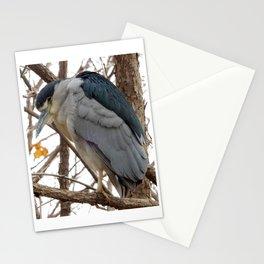 Black-Crowned Night Heron Stationery Cards