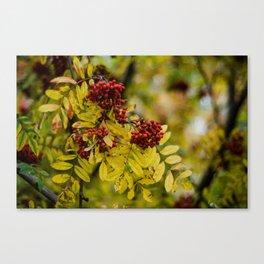 Bright Autumn IV Canvas Print