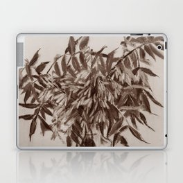 Ash-tree, sepia Laptop & iPad Skin