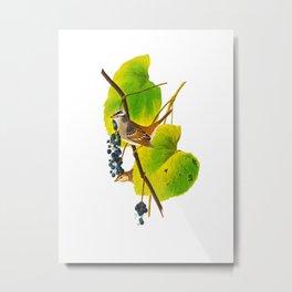 White-crowned Sparrow Bird Metal Print