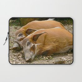 Red River Hogs taking a nap Laptop Sleeve