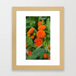 Orange Summer Flowers Framed Art Print