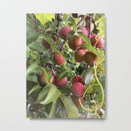 Plum tree Metal Print