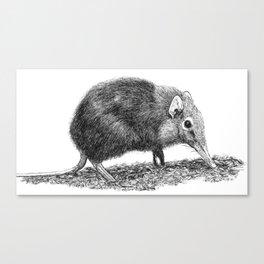 Black Shrew Canvas Print