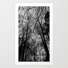 Trees at Mottisfont Art Print