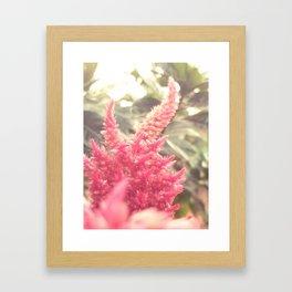 Celosia Framed Art Print