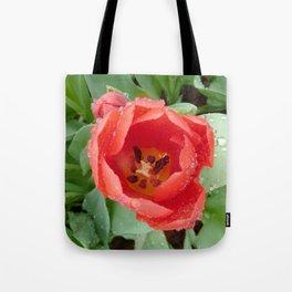 Flower - Tulip Tote Bag