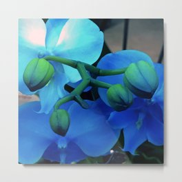 'Butterfly Winged' Violet Blue Orchids With Aqua Accents Metal Print