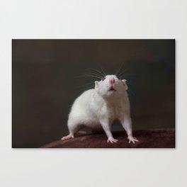 Millie the Rat Canvas Print