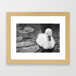"""""""Baby Swan - Black & White"""" Framed Art Print"""