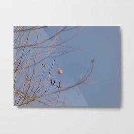 Cocoon Metal Print