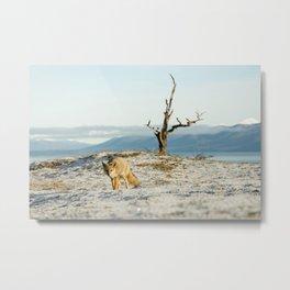 Fox in the snow wildlife Metal Print
