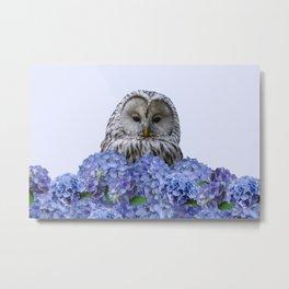 Grey Owl - Hydrangea Blossom Flowers Metal Print
