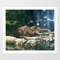 beaver Art Prints featuring beaver by Gary Michael Miller