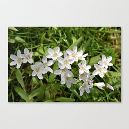 Spring Beauties Canvas Print