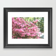 Spring Pink Blossoms Trees Nature Print - Pink Spring Trees Blossoms Framed Art Print