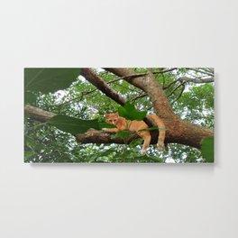 Puss on Tree Metal Print