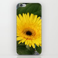 you are my sunshine iPhone & iPod Skins featuring Sunshine  by IowaShots