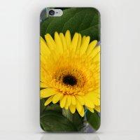 sunshine iPhone & iPod Skins featuring Sunshine  by IowaShots