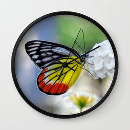 Asian Painted Jezebel butterfly Wall Clock