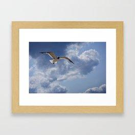 Solo Flight Framed Art Print