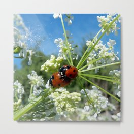 funny ladybug luck at love playing in spring Metal Print