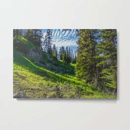 Near Fairy Lake, Gallatin County, MT Metal Print