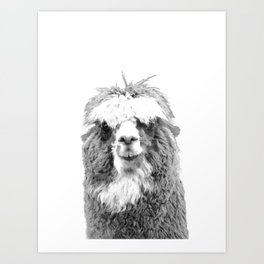 Black and White Alpaca Art Print