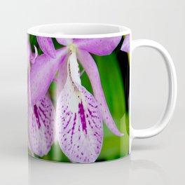 BC Maikai 'Louise' Orchids Coffee Mug