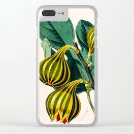 Fig plant, vintage illustration Clear iPhone Case