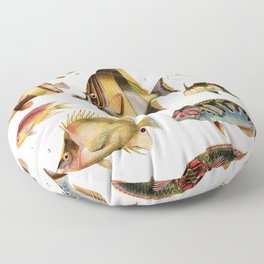 Adolphe Millot - Poissons des coraux - French vintage zoology poster Floor Pillow