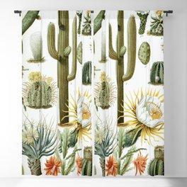 Cactaceae German Botanical Print from Brockhaus Encyclopedia Blackout Curtain
