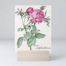 Rosa Centifolia Foliacea Mini Art Print