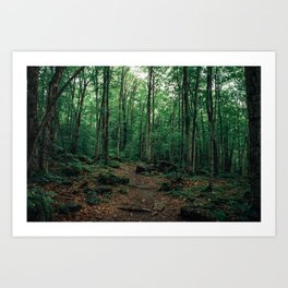 Bruce Caves Forest Art Print