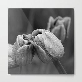 Tulips In Drops Metal Print
