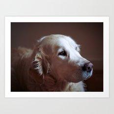 Golden retriever portrait Art Print