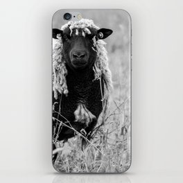 Sheep with sharp eyes iPhone Skin